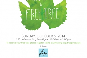 Get a Free Tree for Your Front/Backyard in Bushwick This Sunday!