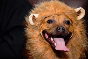 Bushwick Bark's Fourth Annual Doggy Costume Party Is Coming Up at Pine Box Rock Shop